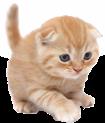 Cat Sound Ringtones Logo